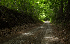 1195 (Keiichi T) Tags:  tree light shadow eos  green forest canon road   6d  japan  leaf