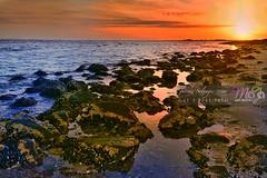 Sealife-Beach-Photography-DSC2198 (fatima_suljagic) Tags: photographer melbourne nikond800 nature naturephotographer landscapes landscapephotography australia fineartprints fineartphotography fatimasuljagicmelbourne artstudiomaja artstudiomajacomau