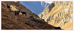 Gran Paradiso (Alfoja) Tags: levionaz leviona gran paradiso parco valledaosta alfoja alpi alps aosta valsavarenche lucianofoglia