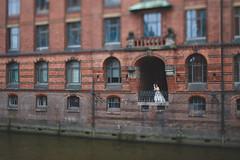 Huan and Jan (williwieberg) Tags: d5 wedding hochzeit hochzeitsfotograf hochzeitsfotografie 45mmf28dmicro hamburg
