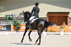 IMG_7500 (dreiwn) Tags: dressage dressur dressuur pferd reitturnier turnierreiten pferdesport horse horseback horseriding equestrian reitverein dressurprfung kandare doublebridle reiten pferde reitplatz ridingarena