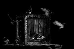 Free as a Bird  !!!! (imagejoe) Tags: vegas nevada street strip black white photography photos shadows reflections people nikon