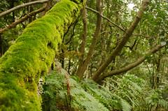 Un da especial (inma F) Tags: bosque excursin laurisilva paisaje planta anaga tenerife