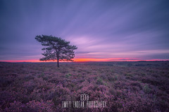 The Red Line of Dawn. *** explored *** (Emily_Endean_Photography) Tags: newforest longexposure bigstopper lee landscape forest heather colours sunrise dawn nikon