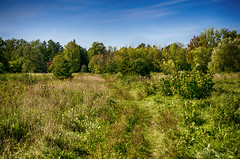 Medley (flashfix) Tags: september292016 2016 2016inphotos nikond7000 nikon ottawa ontario canada 55mm300mm landscape nature mothernature clouds sky bluesky trail greenery foliage trees plants