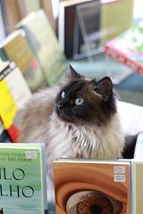 IMG_5122 (Leanne Yang) Tags: canada animal cat edmonton alberta avenue whyte yeg