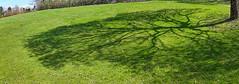 Westpark (epemsl) Tags: shadow grass münchen westpark schatten baum galaxytabs