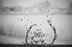 Coffee Splash Tentacles BW (HugsNotDrugs11385) Tags: blackandwhite bw butterfly butterflies bugs mug splash blackandwhitephotography splashphotography coffeesplash