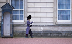 Buckingham Palace Guard (YT Blue) Tags: england london hat uniform guard royal palace buckinghampalace mar