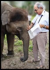 Elephant : Murkal (indianature13) Tags: elephant nature karnataka coorg elephantcamp 2014 nagarhole nagarahole adivasi indianature murkal nanju thithimathi