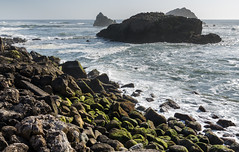 Ocean Rocks (danielfoster437) Tags: california beach landscape ocean scenery scenary waves crashingwaves beautiful nature coast pacificocean californiacoast roughocean roughwater rocks カリフォルニア 海 波 荒波 自然