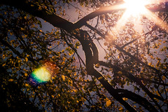 lens flare (Rebel T2i (digital)) Tags: autumn light fall licht reflex herbst lensflare freiburg 2014 perfecteffectspro