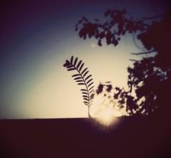 #summer #little #sunrise #nature #leaves #ray #hope #beautiful #beauty #inspiring #view #shots (innovative.inside) Tags: summer nature beautiful beauty sunrise hope ray view little shots inspiring