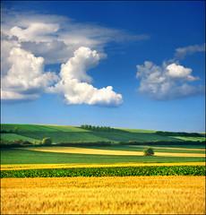 Srem's serenity (Katarina 2353) Tags: landscape spring serbia x fields vojvodina serbiainspired