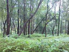 DSC03563 (Gokul Chakrapani) Tags: waterfalls karnataka westernghats bolle charmadi