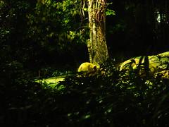 Singapur (hubi88) Tags: singapur urlaub 2016 3tag singapurzoo nightsafari sdostasienrundreise