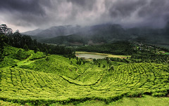 Tea Plantations, Munnar, Kerala (The Canon Fanboy) Tags: munnar kerala india asia monsoon clouds tea plantation luxury travel tourism cloudporn greenery lonelyplanet natgeo nationalgeographicincredibleindia canon photography explore wanderlust