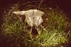 Skull (Crones) Tags: ralsko liberecregion czechrepublic canonef24105mmf4lisusm 24105mmf4lisusm 24105mm canon 6d canoneos6d czech skull