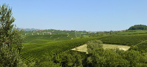 Barolo. Panorama viticolo.