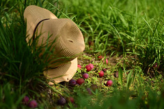 500px Photo ID: 157967647 () Tags: grass hat fruit plum fallen strawhat redfruit redplum fallenfriut