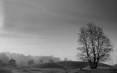 Weinbergsweg, (derkleinebiber) Tags: buckow mrkische schweiz naturpark nature scenery landscape mist fog nebel dunst morgen trees tree forest waldrand baum blackandwhite minimalist