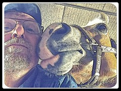 Gewoon Pret (gill4kleuren - 12 ml views) Tags: me gill sarah horse haflinger fun lol kissing