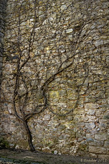 Ancient Wall in Girona (Greatest Paka Photography) Tags: wall old ancient spain girona defensive roman charlemagne tree muralladegerona pattern