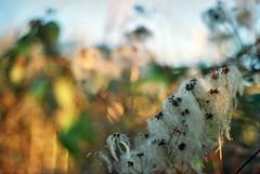 17A_00087 (Thom Epps) Tags: trees nature westonbirt film