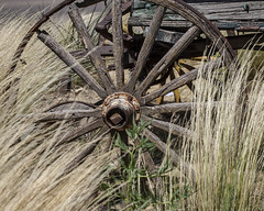 Wagon Wheel (A Anderson Photography, over 1 million views) Tags: wagonwheel spokes woodenwheel weathered grasses wagon canon woodenspokes