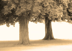 treeness for two (Hal Halli) Tags: trees two couple pair park sepia awardtree magicunicorntheverybest