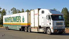 Freightliner Argosy (djw323) Tags: freightliner freightlinerargosy argosy cabover drom drombox movingvan