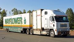 Freightliner Argosy (djw323) Tags: freightliner freightlinerargosy argosy cabover drom drombox movingvan