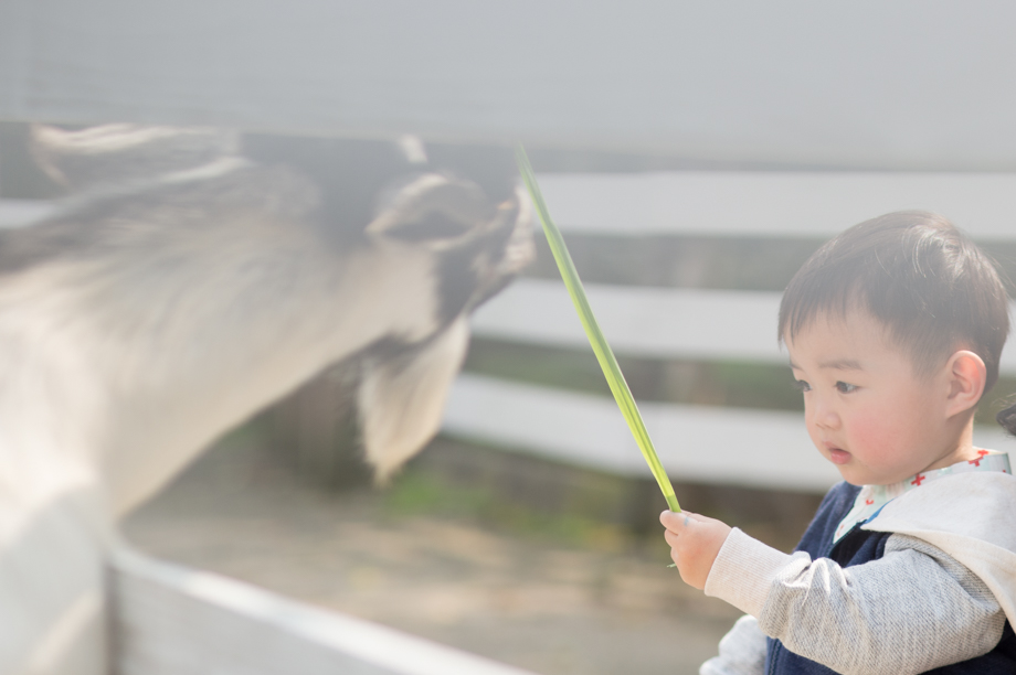 桃園親子寫真兒童攝影 三峽皇后鎮森林0014