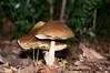 Champignons (jeanluc.vaysse) Tags: bois champignons forêts d90nikon