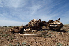 The desert can be harsh and unforgiving