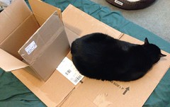 Helping me pack (evil robot 6) Tags: cat riley boxes