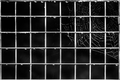 Grid drops and web....    45 (+Pattycake+) Tags: screws 45365 grid water moon droplets bw textures 27jul16 blackandwhite contrast shallowdof monochrome squares railings oneaday web dof metal steel rain cobweb fence lines abstract texture