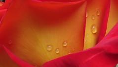 Marseillle 411 (molaire2) Tags: orange saint rose marseille theatre antique arc triomphe pont palais provence notre dame avignon garde ardeche darc grotte papes aven vallon orgnac benezet chauvet