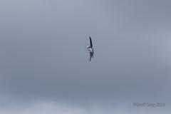 Vought F4U Corsair-38 (Clubber_Lang) Tags: airshow corsair farnborough f4u vought fia2016