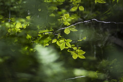 Sun-kissed (A blond-Tess) Tags: greenleaves greens folige greenfolige summerfolige refelction canonphotography tessaxelsson dreams dreamwithme summer reflectioninwater ilovenature soft canon 7d naturephotography naturallight nature natur creative mirrored lochwinnoch flora s
