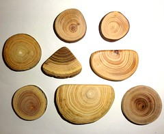 Wood jewelry findings components. Jewelry supply, jewelry craft for rings, earrings, pendants, necklaces, brooches, key chains, magnets ... (john bonham2) Tags: jewelrysupplies jewelryfindings jewelry supply findings natural wood mix slices branches trees nature making parts