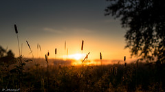 Sunrise (JH') Tags: nikon nikond5300 d5300 nature landscape nikkor 35mm summer sun sky tree sunrise