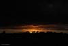 DSC_0212 (timmie_winch) Tags: nikon nikond3000 d3000 august august2016 2016 sun sunset sunsetsuffolk sunsetoversuffolkcountryside sunsetovercornfields sunsetovercornfield silhouette 18105mm 18105vr nikon18105mmvrlens shadows golden goldenhour goldenlight elliedunn ellie eleanordunn ells eleanor ellsdunn dunn landscape landscapephotography landscapephotographer naturephotographer naturephotography nature timwinchphotography tim timwinch winch debenham ip14 suffolk