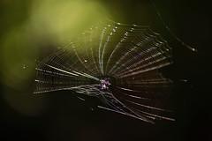 The Lightcatcher [EXPLORED] (chockolina) Tags: spider spidernet net light lightcatcher green bokeh catch d750 nikon f28 1050mm