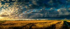 A Cornfield Sunset (D.ROS) Tags: 2016 black blue clouds day field green light magenta meadow mill nature netherlands orange outdoor polder schagen sun sunset yellow corn cornfield supershot