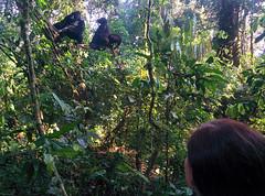 Contact (bknoles) Tags: kinkiizi westernregion uganda ug