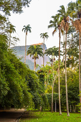 DSC_5388 (sergeysemendyaev) Tags: 2016 rio riodejaneiro brazil jardimbotanico botanicgarden     outdoor nature plants   palms   green  beauty
