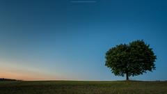 Tree (Sascha Gebhardt Photography) Tags: nikon nikkor d800 1424mm tree lightroom landscape landschaft photoshop fototour fx nacht natur night grn green