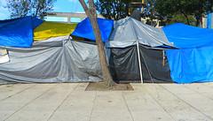 Un rbol inclinado (Robert Saucier) Tags: mexico mexicocity cdmx plazadelarevolucion tentes bleu blue jaune yellow trottoir sidewalk pavement arbre tree gris grey img9084