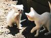 Give me the five (leonardomuoz99) Tags: nikon coolpix p500 animal discover cachorros aire libre tierra blanco nature trans nikoncoolpixp500